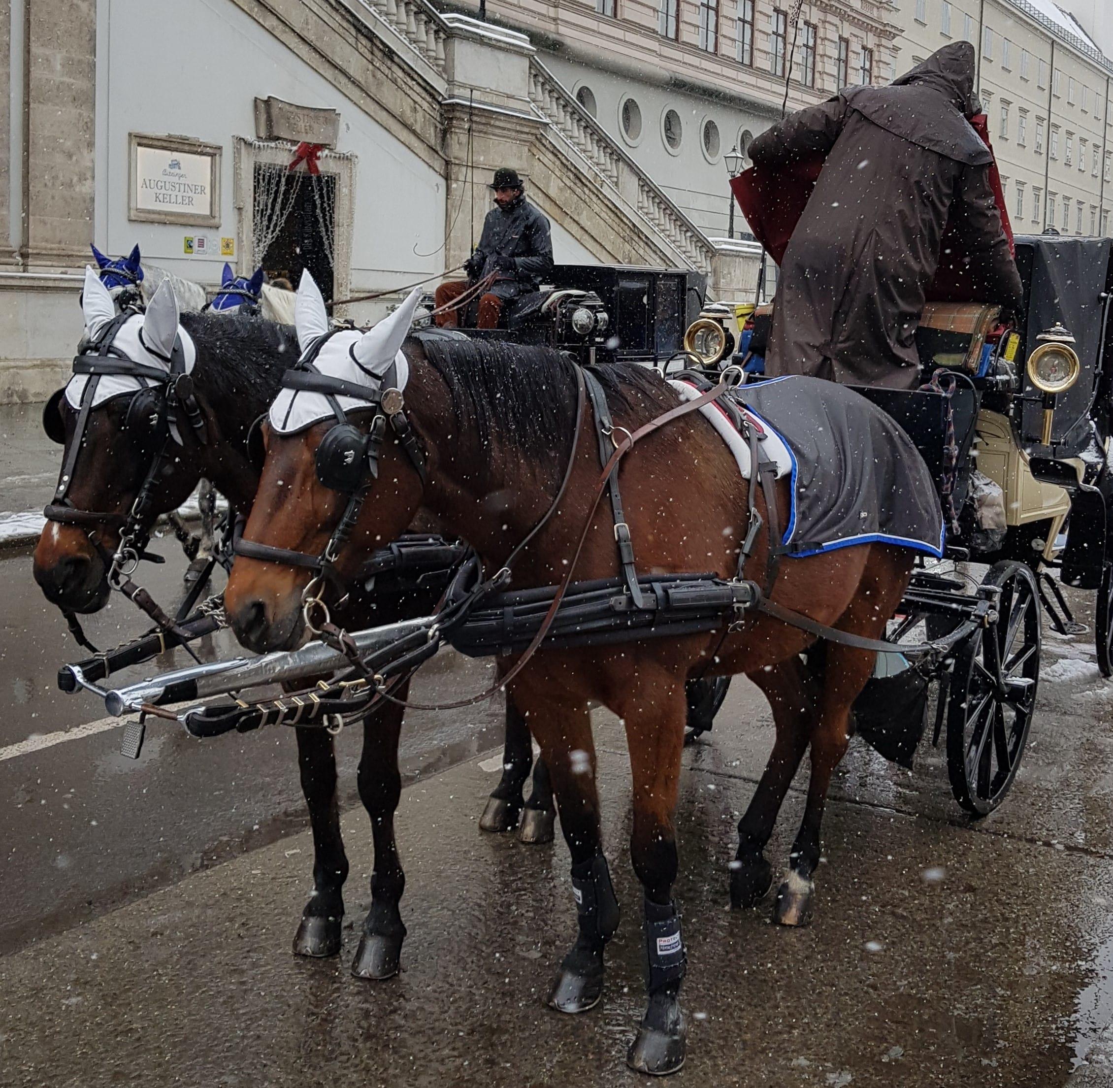 Coche de caballos y su conductor en Viena