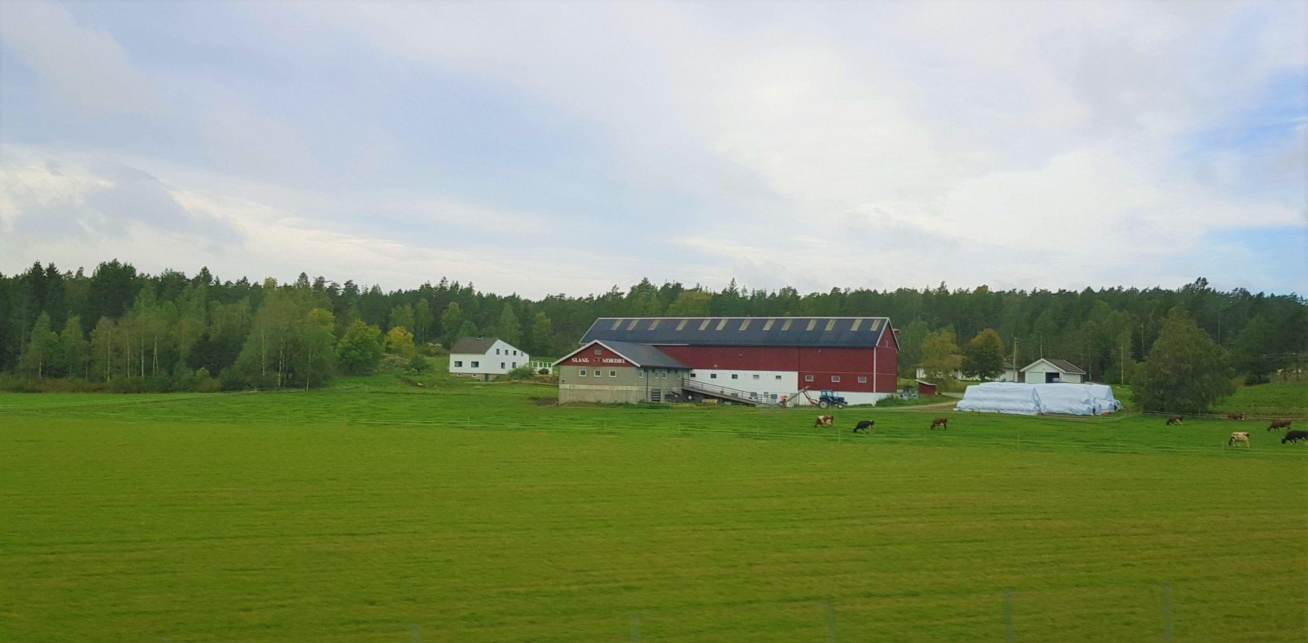 Camino a smögen. Pradera verde con granja y bosque de Suecia.